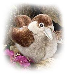 audubon house wren